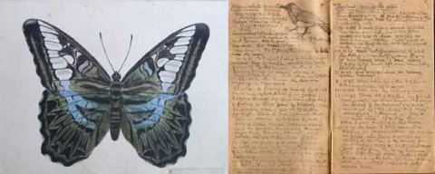 "Ronald John ""Jack"" Spittle drawing of a butterfly"